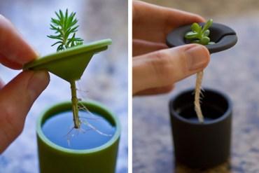 Rootcup ปลูกพืชแนวใหม่ 14 - root