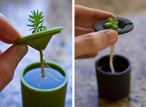 Rootcup ปลูกพืชแนวใหม่ 14 - water
