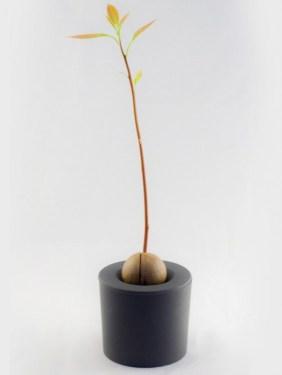 rootcup5 282x375 Rootcup ปลูกพืชแนวใหม่