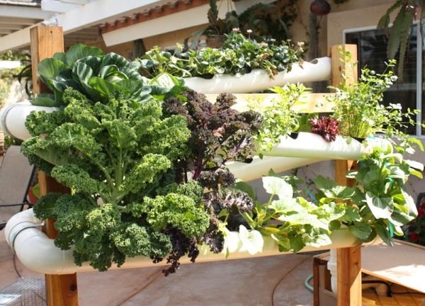 ระบบสวนแนวตั้ง สำหรับบ้านพื้นที่จำกัด และไม่มีเวลาดูแลรดน้ำ พรวนดิน 13 - vertical garden