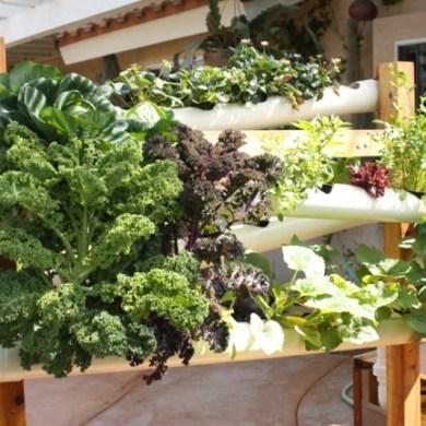 ระบบสวนแนวตั้ง สำหรับบ้านพื้นที่จำกัด และไม่มีเวลาดูแลรดน้ำ พรวนดิน 16 - vertical garden
