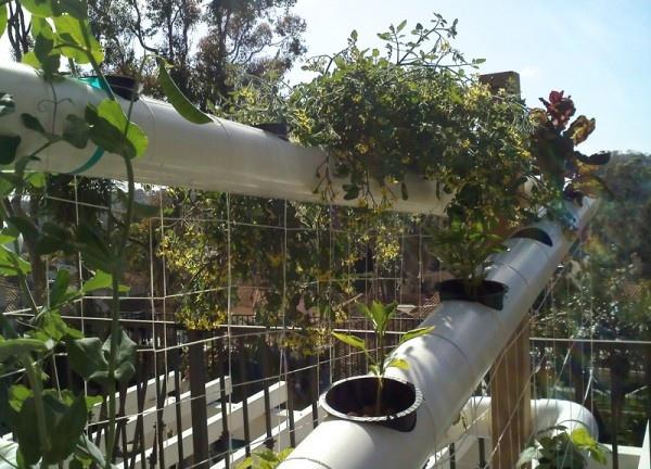 25560210 150739 ระบบสวนแนวตั้ง สำหรับบ้านพื้นที่จำกัด และไม่มีเวลาดูแลรดน้ำ พรวนดิน