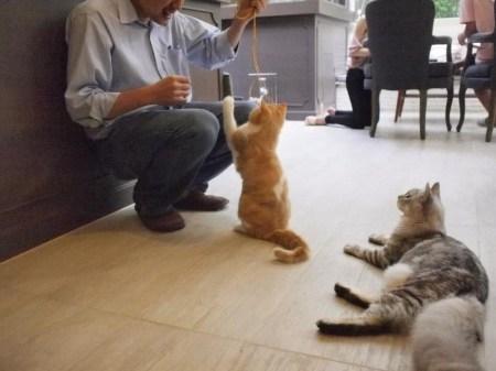 179601 255277091273197 1480198584 n 450x337 PURR CAT CAFE CLUB คลับแมวเหมียว