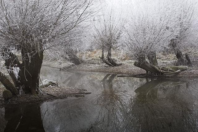 25560308 083520 A Frosty Morning..ภาพยามเช้าที่ห่มคลุมด้วยน้ำค้างแข็ง..สวยงาม สงบนิ่ง