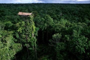 บ้านต้นไม้สูงขนาดตึก16ชั้น ใจกลางป่าลึกในอินโดนีเซีย 22 -
