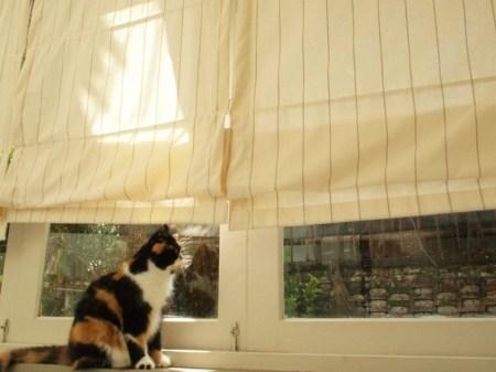 483412 215177178616522 1476314600 n 450x337 PURR CAT CAFE CLUB คลับแมวเหมียว