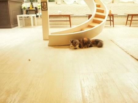 60795 218456511621922 1943758351 n 450x337 PURR CAT CAFE CLUB คลับแมวเหมียว