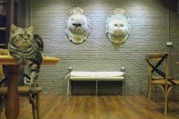 PURR CAT CAFE CLUB คลับแมวเหมียว
