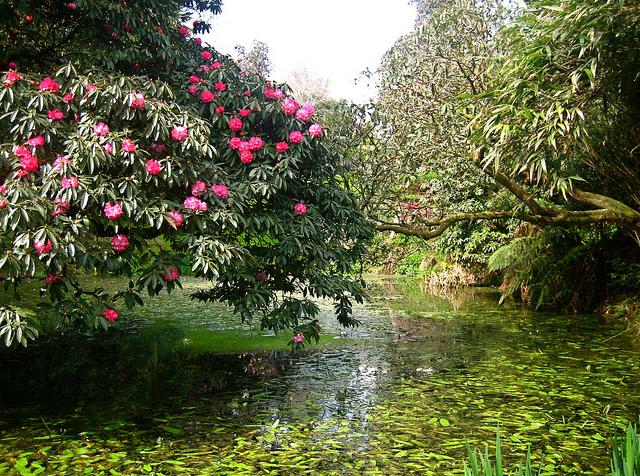 7124177881 33195d263c z The Lost Gardens of Heligan...สวนอายุ 400ปี ที่หายไปจากโลกนี้เกือบ 100ปี