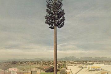 Cell PHone Tree.. ต้นไม้ยักษ์สายพันธุ์ใหม่ของโลกยุคดิจิตอล