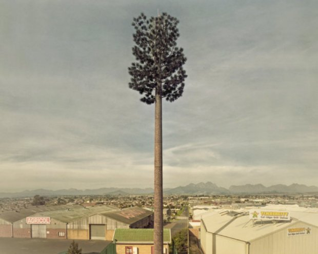 Invasive Species Dillon Marsh 5 620x495 Cell PHone Tree.. ต้นไม้ยักษ์สายพันธุ์ใหม่ของโลกยุคดิจิตอล