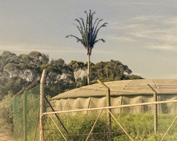 Invasive Species Dillon Marsh 6 620x495 Cell PHone Tree.. ต้นไม้ยักษ์สายพันธุ์ใหม่ของโลกยุคดิจิตอล