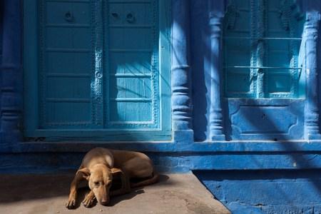 5284104831 2f7b81a818 z 450x300 Bule City เมืองสีฟ้ากลางทะเลทราย ในประเทศอินเดีย