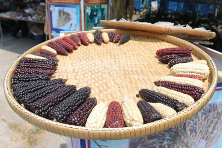582704 391413834257573 759285593 n 450x299 Seed Exchange ปลูกกิน ปลูกเก็บ ปลูกอนุรักษ์(พันธุ์แท้)พันธุ์พื้นบ้าน