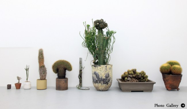 665 top 01 cactus 650x379 Qusamura นักจัดดอกไม้ ที่ชื่นชอบในความงามของต้นกระบองเพชร