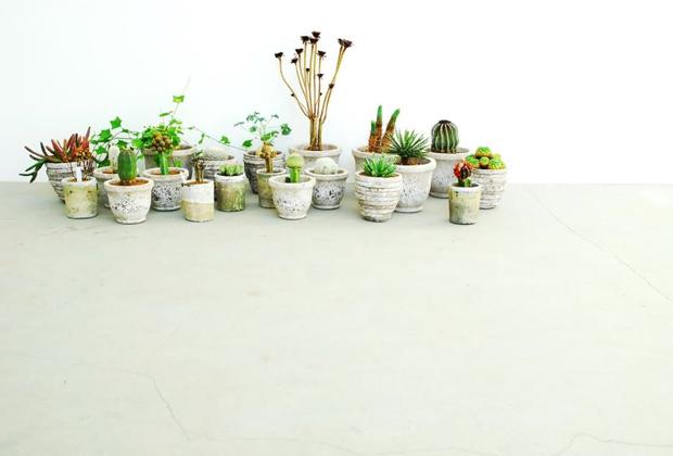 Plant Imagery by Qusamura 2 Qusamura นักจัดดอกไม้ ที่ชื่นชอบในความงามของต้นกระบองเพชร