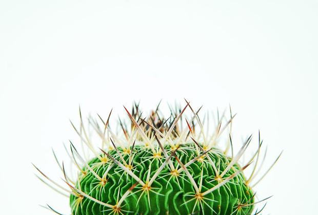 Plant Imagery by Qusamura 7 Qusamura นักจัดดอกไม้ ที่ชื่นชอบในความงามของต้นกระบองเพชร
