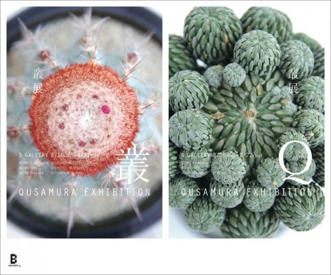 %name Qusamura นักจัดดอกไม้ ที่ชื่นชอบในความงามของต้นกระบองเพชร