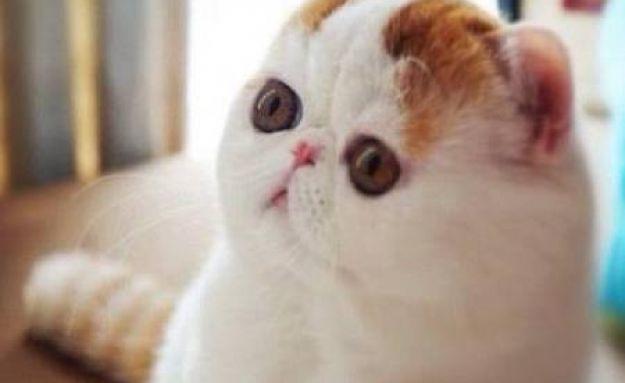 cutest cat ever snoopy featured Snoopybabe แมวเซเลบฯ บนโลกออนไลน์