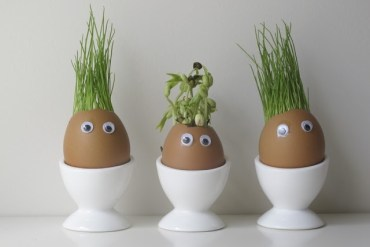 แก๊งค์หัวเขียว..ไอเดียกระถางจากเปลือกไข่ 15 - DIY