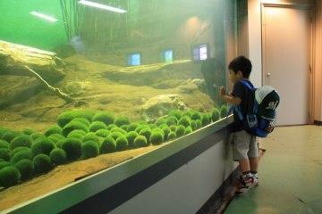 まりも Marimo มาริโมะ (Moss ball)พืชน้ำสุดฮิต 8 - Marimo