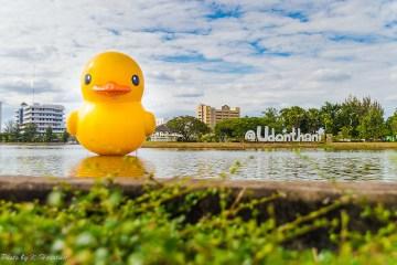 Giant Rubber Duck floats Udon Thani pride เป็ดยักษ์ ล่องลอยที่ จ.อุดรธานี