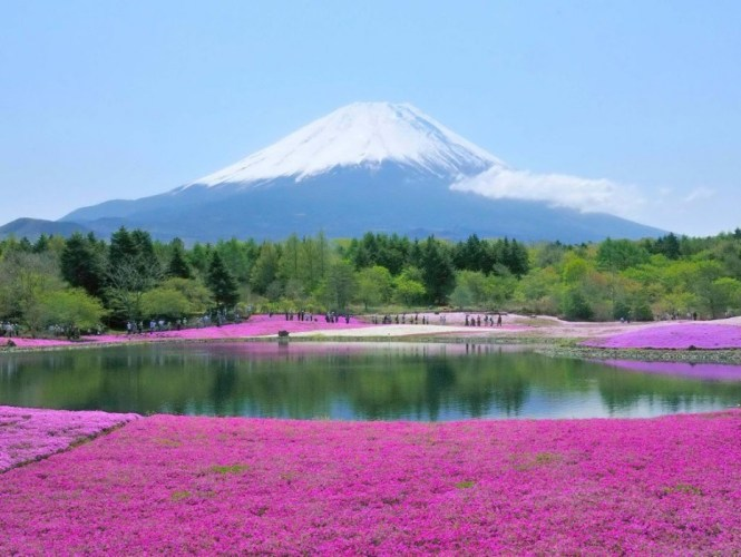 21.05.09 富士 芝桜祭り―01