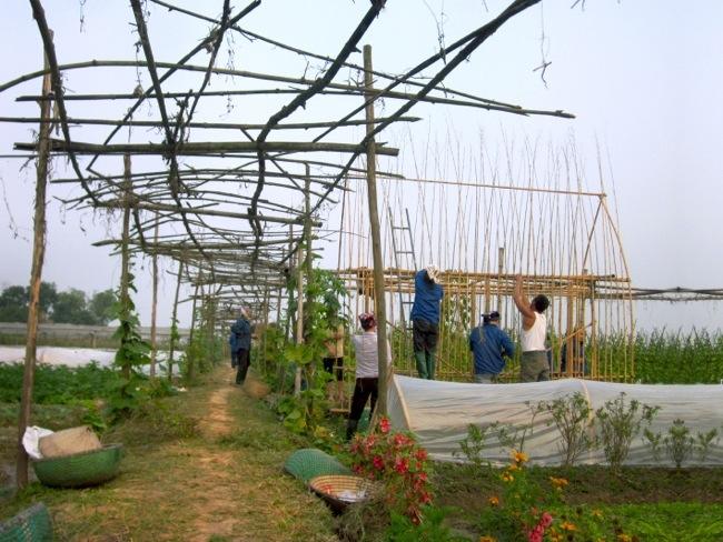 25570312 172615 โรงอนุบาลผัก ทำจากไม้ไผ่ และขวดพลาสติก ความร่วมมือระหว่างคนในเมือง และเกษตกรในชนบท