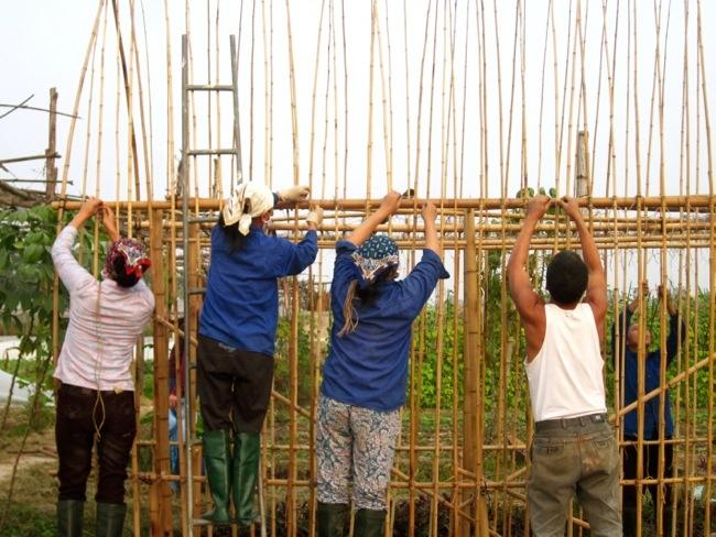 25570312 172710 โรงอนุบาลผัก ทำจากไม้ไผ่ และขวดพลาสติก ความร่วมมือระหว่างคนในเมือง และเกษตกรในชนบท