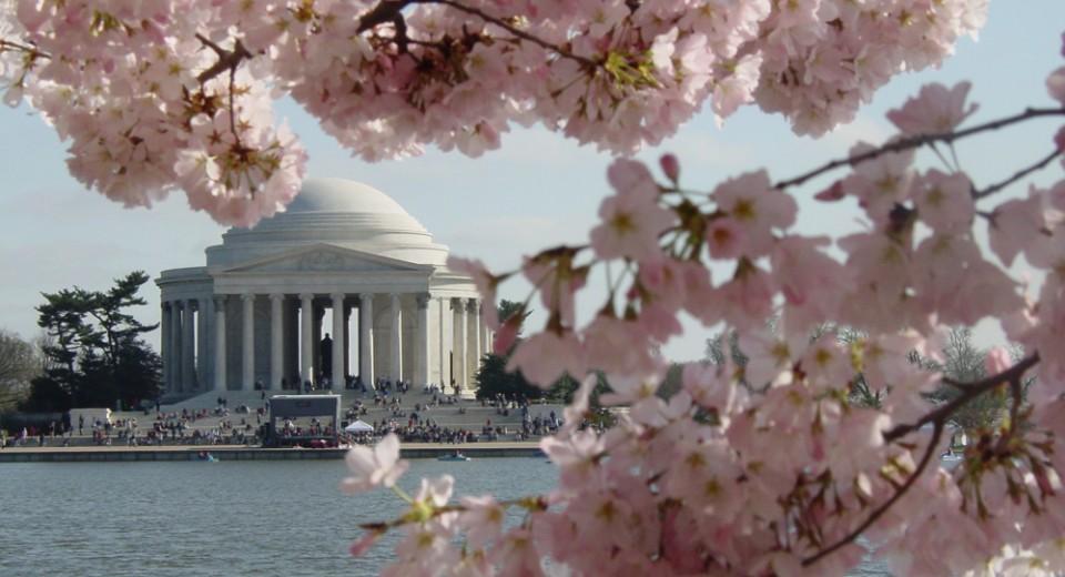 cherry blossom fest jefferson background 1 เทศกาลซากุระ National Cherry Blossom Festival