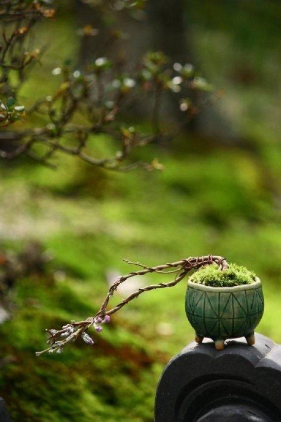 image5 Kusamono..สวนกระถางแบบญี่ปุ่นที่นำเอาธรรมชาติมาย่อไว้ในกระถางใบเล็กๆ