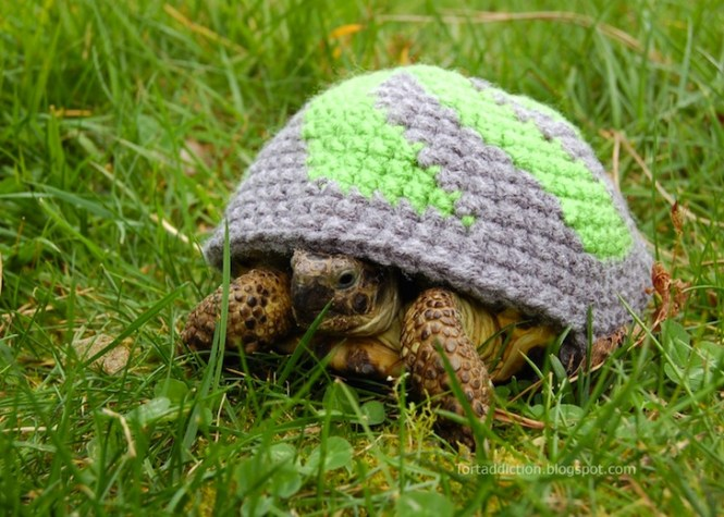 tortoise-cozie-purple-green