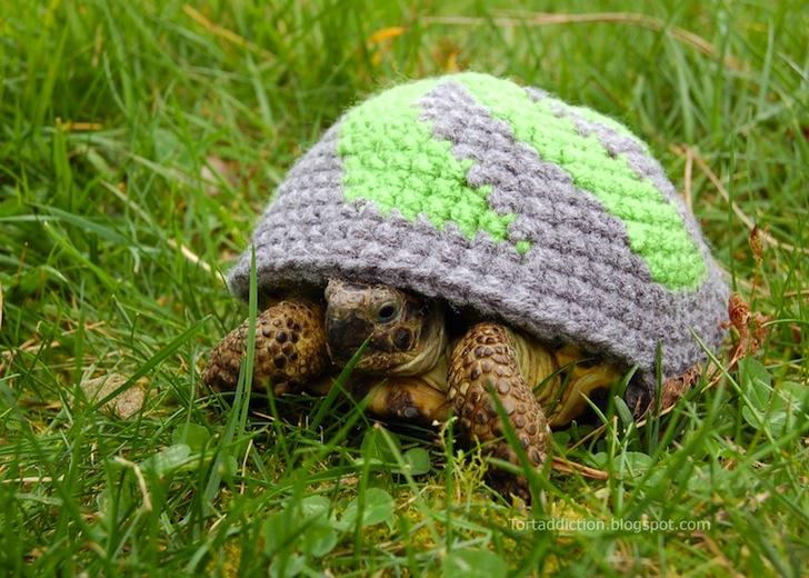 tortoise cozie purple green ถ้กเสื้อไหมพรมให้เต่าน้อย