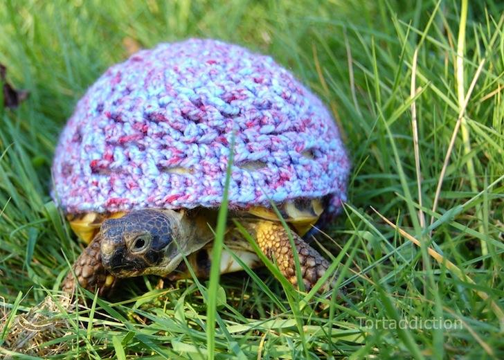 tortoise cozie purple ถ้กเสื้อไหมพรมให้เต่าน้อย