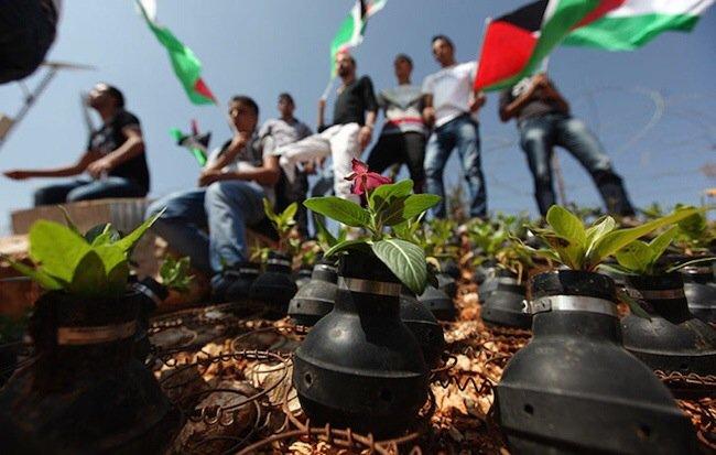 20140602 212041 76841761 ชาวปาเลสไตน์ในเขต West Bank สร้างสวนที่เป็นอนุสรณ์จากปลอกกระสุนแก๊สน้ำตา