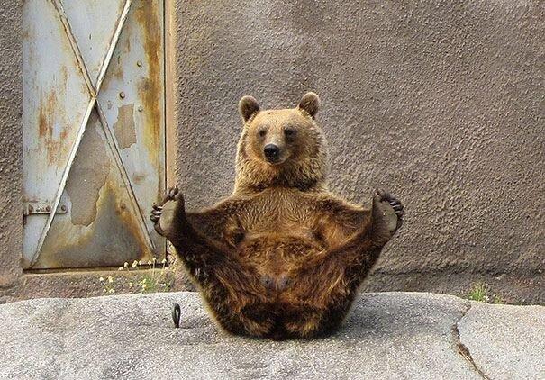 เชื่อแล้วว่า ต้นตำรับโยคาจารย์คือบรรดาสัตว์ทั้งหลาย! 13 - yoga post
