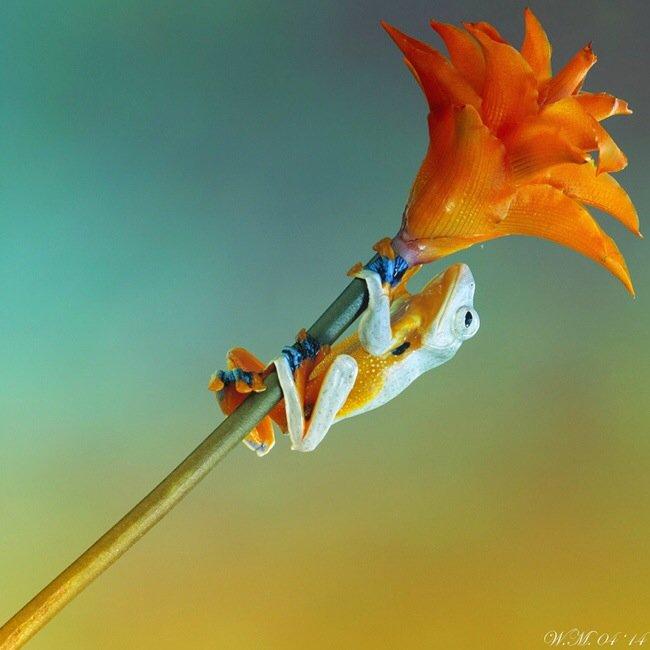 ภาพถ่าย Macro โลกของกบ สวยงาม ชวนฝัน เกินบรรยาย 21 - macro picture