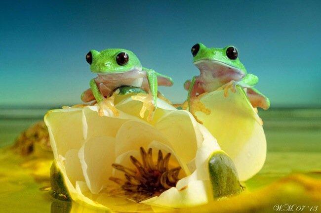 ภาพถ่าย Macro โลกของกบ สวยงาม ชวนฝัน เกินบรรยาย 30 - macro picture