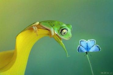 ภาพถ่าย Macro โลกของกบ สวยงาม ชวนฝัน เกินบรรยาย 13 - ถ่ายภาพ