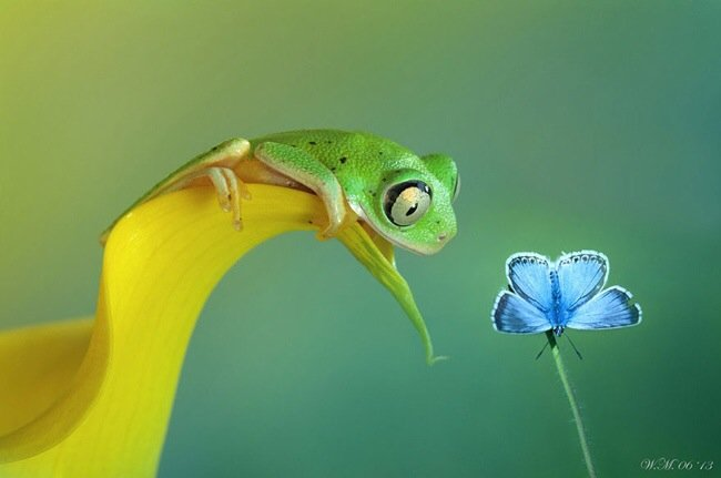ภาพถ่าย Macro โลกของกบ สวยงาม ชวนฝัน เกินบรรยาย 19 - INSPIRATION