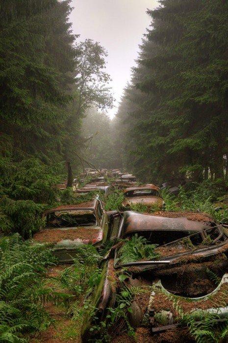 20140724 122333 44613468 การจราจรติดขัดในป่าที่เบลเยียมเป็นเวลา กว่า 70 ปี