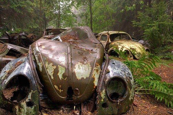 20140724 122333 44613664 การจราจรติดขัดในป่าที่เบลเยียมเป็นเวลา กว่า 70 ปี