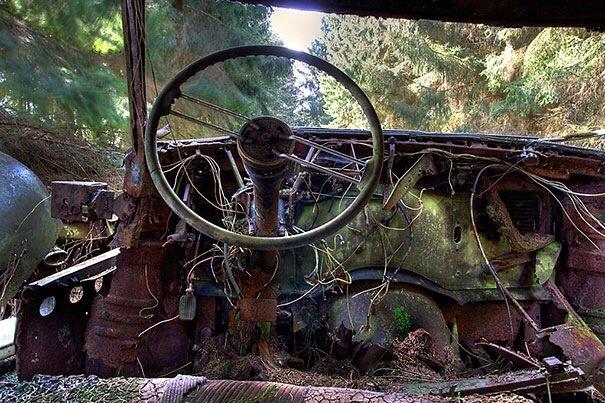 20140724 122333 44613727 การจราจรติดขัดในป่าที่เบลเยียมเป็นเวลา กว่า 70 ปี