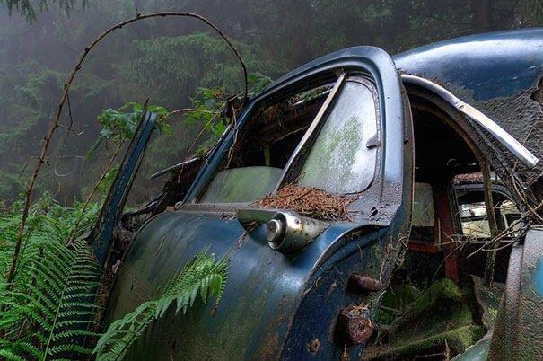20140724 122333 44613943 การจราจรติดขัดในป่าที่เบลเยียมเป็นเวลา กว่า 70 ปี