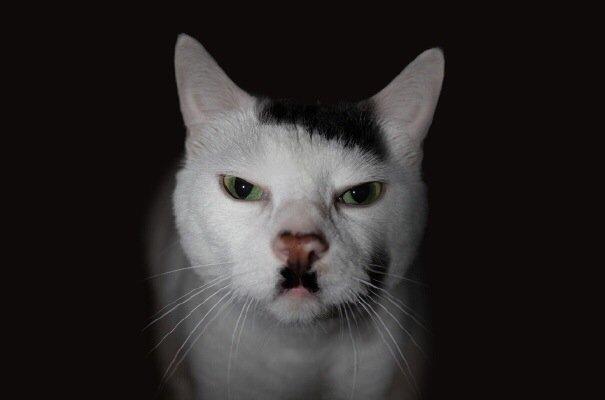 20140730 100152 36112612 สัตว์ที่โด่งดังในโลกออนไลน์ เพราะลวดลายแปลกๆ
