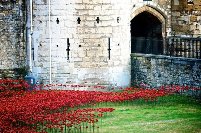 20140804 211502 76502555 Installation Art ..ดอกป๊อปปี้ไหลนองเพื่อรำลึกถึงผู้เสียชีวิตในสงครามโลกครั้งที่1