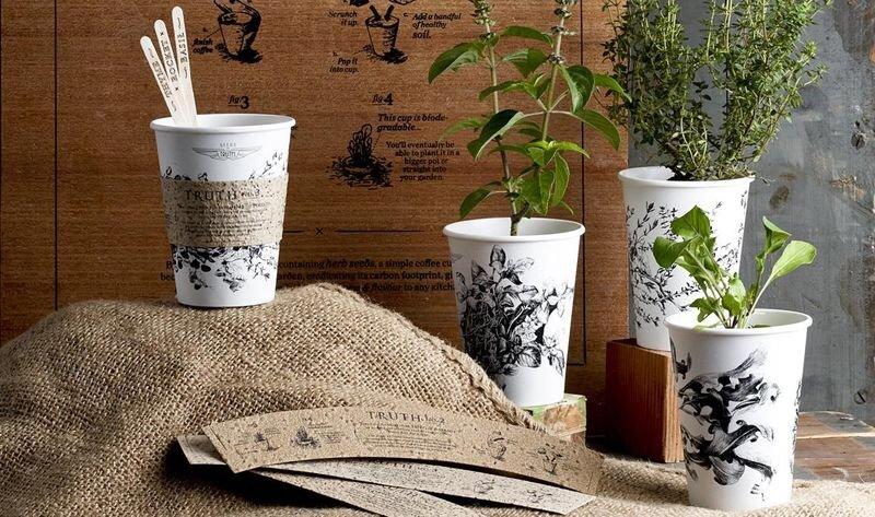 IMG 4587 ถ้วยกาแฟรักโลก รีไซเคิลขยะเป็นกระถางต้นไม้จากเมล็ดพืชฝังอยู่