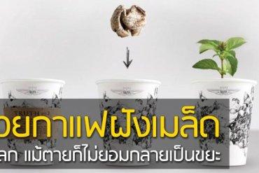ถ้วยกาแฟรักโลก รีไซเคิลขยะเป็นกระถางต้นไม้จากเมล็ดพืชฝังอยู่ 18 - กระถางต้นไม้