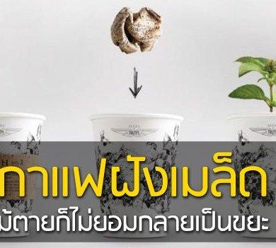 ถ้วยกาแฟรักโลก รีไซเคิลขยะเป็นกระถางต้นไม้จากเมล็ดพืชฝังอยู่ 15 - กระถางต้นไม้