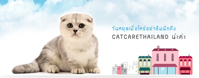 weekend Cat Care Shop โรงแรมแมวเหมียว